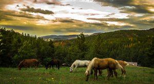 horses 1220x667